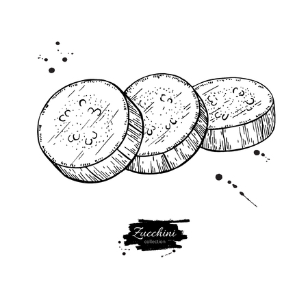 Zucchini slice hand drawn vector illustration. Isolated Vegetable engraved style object. Detailed vegetarian food Ilustracja