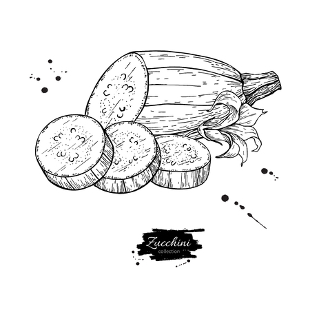 Zucchini hand drawn vector illustration. Isolated Vegetable engr Ilustracja