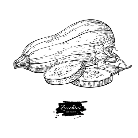 Zucchini hand drawn vector illustration. Isolated Vegetable engr Zdjęcie Seryjne - 77093736