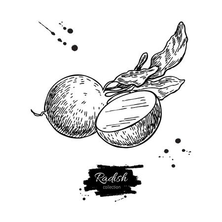 大根手には、ベクター グラフィックが描画されます。孤立した野菜には、スタイル オブジェクトのスライスを wirh 作品が刻まれています。