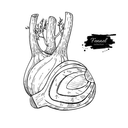 Gezeichnete Vektorillustration des Fenchels Hand. Lokalisierter Gemüse gravierter Artgegenstand mit geschnittenen Stücken.
