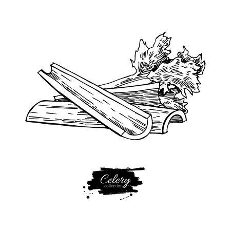 셀러리 스틱 손으로 그려진 된 벡터 일러스트 레이 션. 절연 야채 새겨진 된 스타일 개체입니다. 자세한 채식 음식 그림 일러스트
