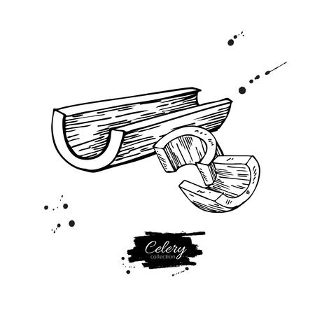 셀러리 스틱 손으로 그려진 된 그림입니다. 절연 야채 새겨진 된 스타일 개체입니다. 자세한 채식 음식 그림