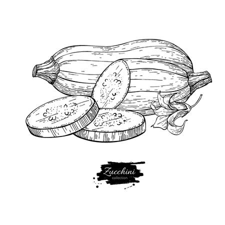 ズッキーニの手描きのベクター イラストです。孤立した野菜 engr