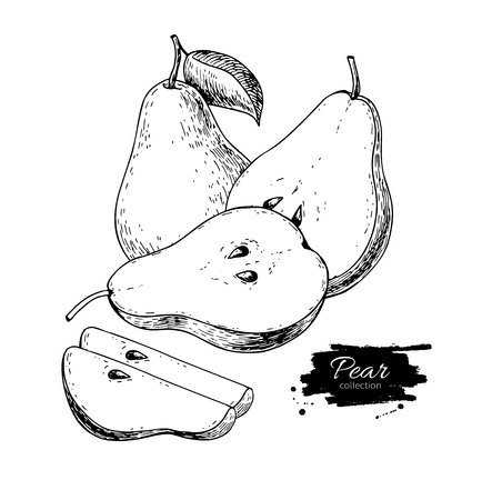 Pear vector drawing. Isolated hand drawn pear and sliced pieces. Ilustrace