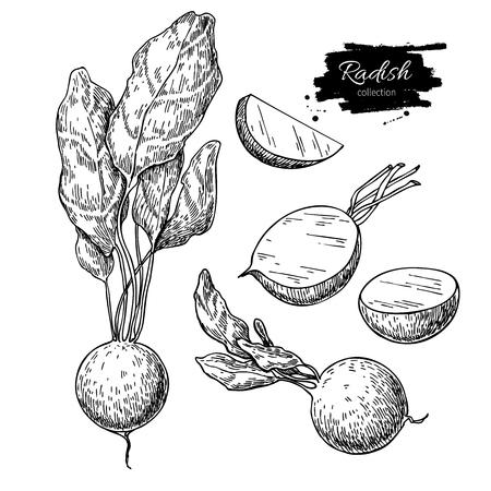 大根手描きのベクトル図を設定します。スライスした部分と分離野菜の刻まれたスタイル オブジェクト。