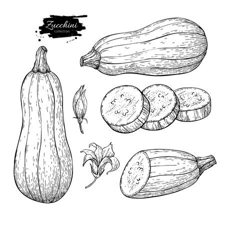 Courgette hand getrokken vector illustratie set. Geïsoleerde groente