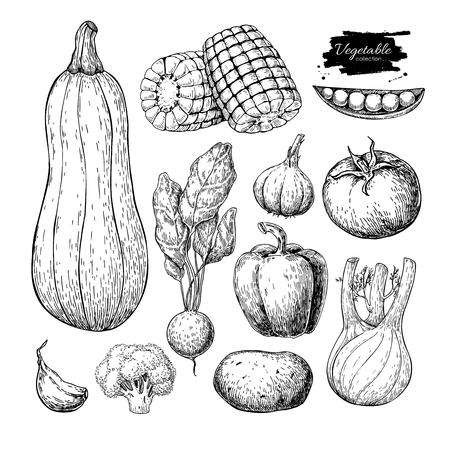 Set di vettore disegnato a mano di verdure. Isolata, vegatarian, inciso, st Archivio Fotografico - 77773777