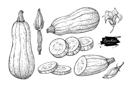 Zucchini hand drawn vector illustration set. Isolated Vegetable engraved style object with sliced pieces and flower. Illustration