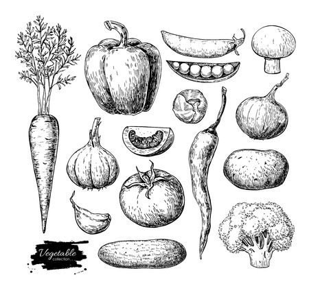 Vegetable hand drawn vector set. Isolated vegatarian engraved st