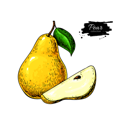 Pear vector drawing. Isolated hand drawn pear and sliced pieces. Ilustração