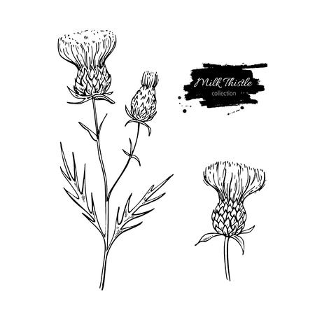 ミルク シスル花のベクトル図面セット。隔離された野生植物と葉。ハーブの刻まれたスタイルの図。詳細な植物スケッチ