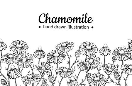 カモミール ベクター ドローイング フレーム。デイジーの野生の花と葉を分離しました。ハーブの刻まれたスタイルの図。紅茶、有機化粧品、医学