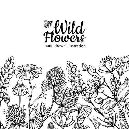 Wild flowers vector drawing set. Isolated  meadow plants and leaves. Herbal engraved style illustration. Detailed botanical sketch frame