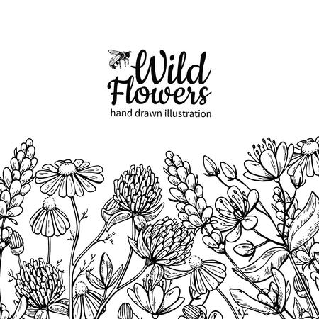 Wilde bloemen vector tekening set. Geïsoleerde weide planten en bladeren. Kruiden gegraveerde stijlillustratie. Gedetailleerd botanisch schetsframe