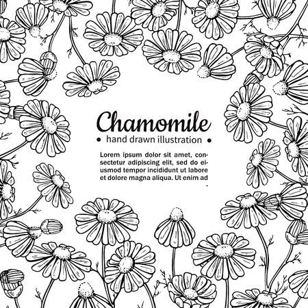 Chamomile vector drawing frame. Isolated daisy wild flower and leaves. Herbal engraved style illustration. Illustration