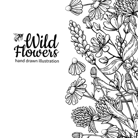 Wild flowers vector drawing set. Isolated meadow plants and leaves