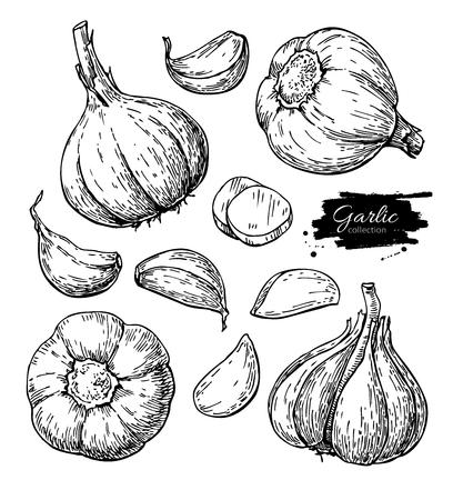Knoflook hand getekende vector illustratie set. Geïsoleerde Groente, c