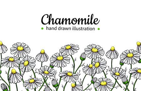 카모마일 벡터 드로잉 프레임입니다. 격리 된 데이지 야생 꽃과 나뭇잎입니다. 초본 예술적 스타일 그림입니다.