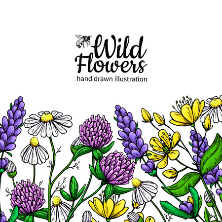 Wild flowers vector drawing set. Isolated meadow plants and leaves. Herbal artistic