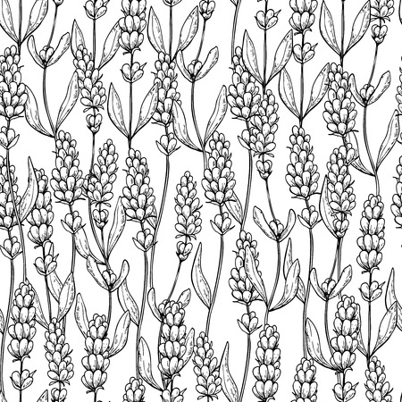 Lavendel vector tekening naadloze patroon. Geïsoleerde wilde bloem en bladeren. Kruiden gegraveerde stijlachtergrond. Stock Illustratie