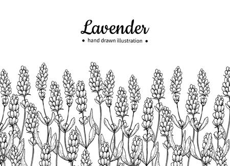 라벤더 벡터 드로잉 테두리입니다. 격리 된 야생 꽃과 나뭇잎입니다. 초본 새겨진 된 스타일 그림입니다.