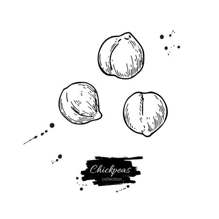Chickpeas hand drawn vector illustration. Isolated Vegetable engraved style object. Detailed vegetarian food drawing. Farm market product. Great for menu, label, icon Vettoriali