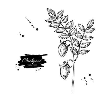 De kekers planten hand getrokken vectorillustratie. Geïsoleerd Plantaardig gegraveerd stijlvoorwerp. Gedetailleerde vegetarische voedseltekening. Farm market product. Geweldig voor menu, label, pictogram