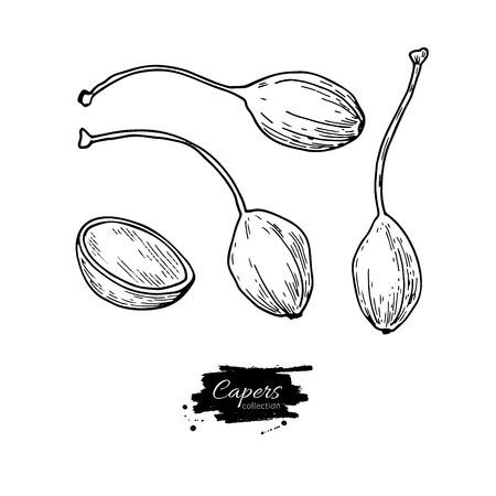 ケッパー手描きのベクター イラストです。孤立した野菜には、スタイル オブジェクトが刻まれています。図面詳細なベジタリアン料理。ファームの 写真素材