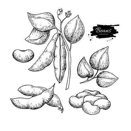 Illustration vectorielle de haricot blanc plante dessiné à la main. Objet de style gravé de légume isolé. Vecteurs