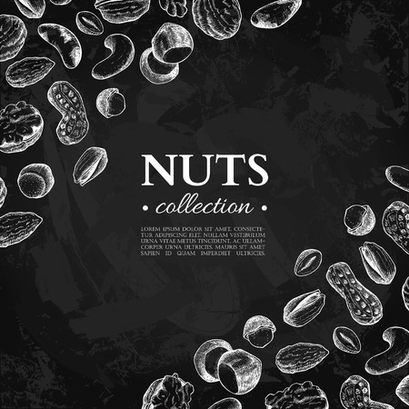 Nuts vector vintage illustration. Hand drawn chalkboard food objects. Great for label, banner, flyer, card, business promote.