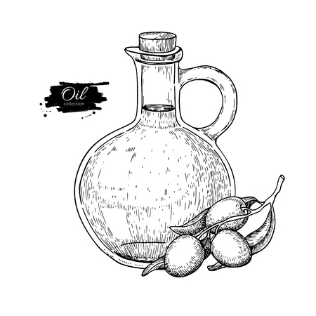 Bottle of olive oil and olive branch. Vector Hand drawn illustration. Glass pitcher vintage Vectores