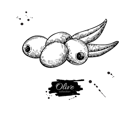 oliva: Pitted olive with leaves. Hand drawn vector illustration. Isolated drawing on white background.
