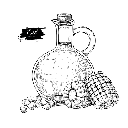 Bottle of corn cooking oil, Vector Hand drawn illustration, Glass pitcher vintage engraving isolated on white background, Great for menu, banner, label, logo, flyer