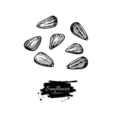 Sunflower seed set vector drawing.