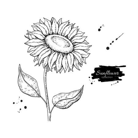 해바라기 꽃 벡터 드로잉, 손으로 그린 그림 흰색 배경에 고립 빈티지 스타일 식물 스케치입니다. 일러스트