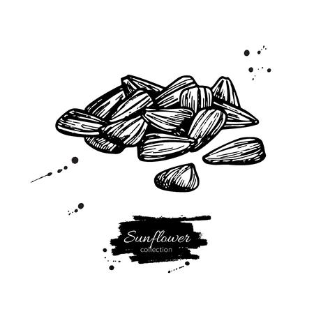 Disegno di vettore del mucchio del seme di girasole Illustrazione isolata disegnata a mano. Schizzo di ingrediente alimentare. Ottimo per la progettazione di imballaggi, etichette, carta da imballaggio