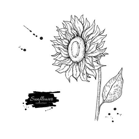 ひまわりの花のベクトル図面します。手描きイラストは、白い背景で隔離。ビンテージ スタイルの植物スケッチ。  イラスト・ベクター素材