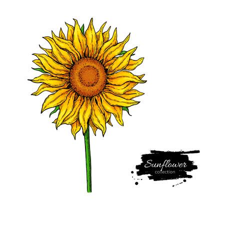 ひまわりの花のベクトル図面します。手描きイラストは、白い背景で隔離。  イラスト・ベクター素材