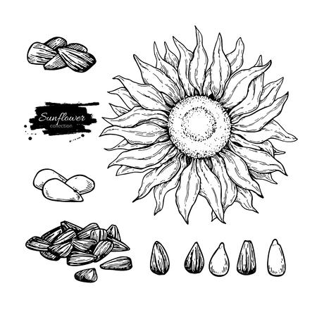 ひまわりの種子や花のベクトル描画を設定します。手には、孤立した図が描かれました。食品成分のスケッチ。  イラスト・ベクター素材