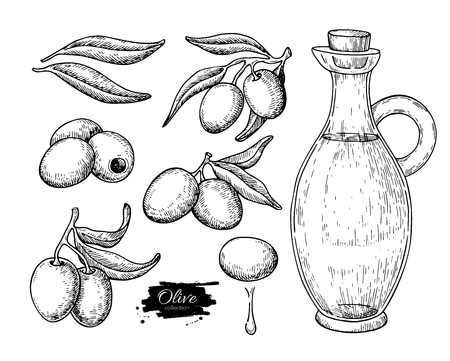 etch glass: Olive oil bottle and olive branch. Vector Hand drawn illustration. Glass pitcher and food engraving isolated