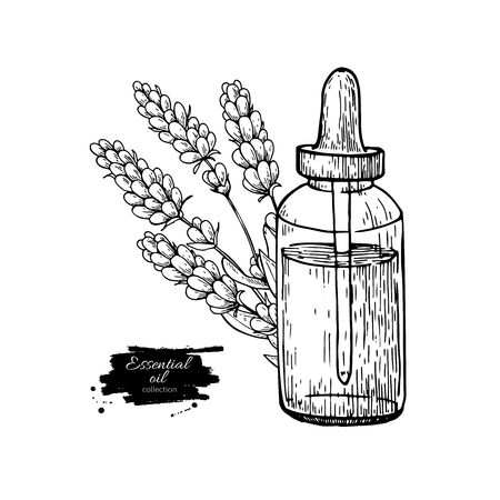 Lavander essential oil bottle and bunch of flowers hand drawn vector illustration. Isolated drawing for Aromatherapy treatment, Vectores