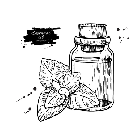 Mint essential oil bottle and peppermint leaves hand drawn vector illustration. Isolated plant drawing for Aromatherapy treatment,