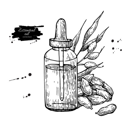 Cardamom essential oil bottle and cardamom seeds hand drawn vector illustration. Isolated plant drawing for Aromatherapy
