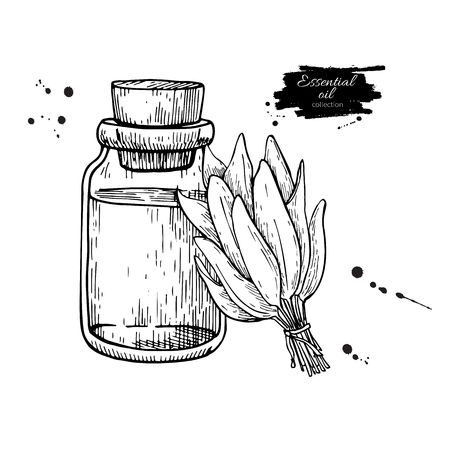 medical drawing: Sage essential oil bottle and sage leaves hand drawn vector illustration. Isolated plant drawing for Aromatherapy