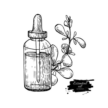 마요 라 람 에센셜 오일 병 및 마술 나뭇잎 손으로 그린 벡터 그림은 나뭇잎. 아로마 테라피를위한 고립 식물 그림