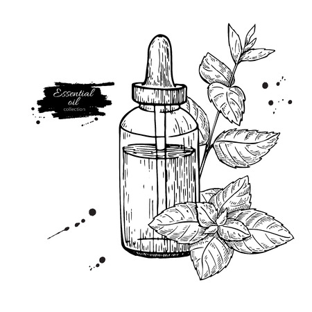 etch glass: Mint essential oil bottle and peppermint leaves hand drawn vector illustration. Isolated plant drawing for Aromatherapy treatment,