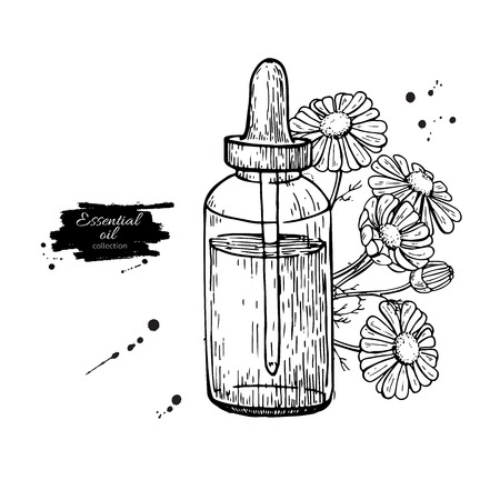 Chamomile essential oil bottle and bunch of flowers hand drawn vector illustration. Isolated drawing for Aromatherapy treatment,