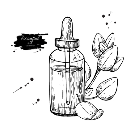 etch glass: Oregano essential oil bottle and oregano leaves hand drawn vector illustration. Isolated plant drawing for Aromatherapy