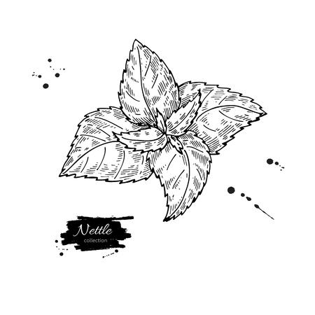 イラクサのベクトル描画します。隔離された医療植物を葉します。ハーブの刻まれたスタイルの図。詳細です